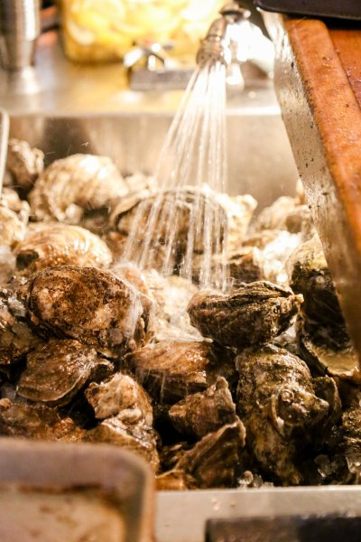 Fresh Oysters behind the bar